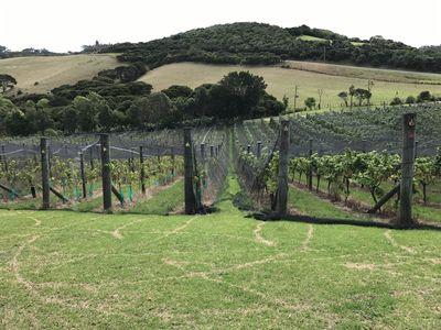 おいしいワインが造られるもととなる、ブドウ畑♪ | 絶景事典