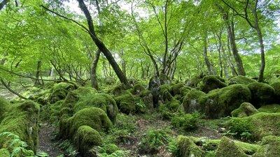 🐿リスに会える森   絶景事典