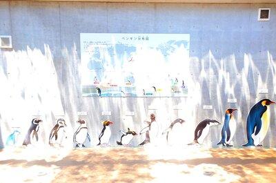 森きららのペンギン館 | 絶景事典