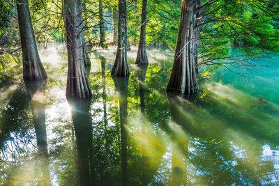 光射すラクウショウの池 | 絶景事典