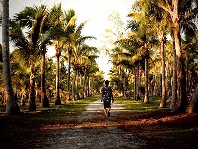 千本椰子   絶景事典