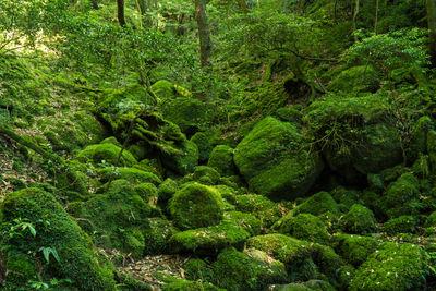 屋久島 自然が作るアート | 絶景事典
