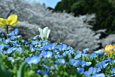 春爛漫 | 絶景事典