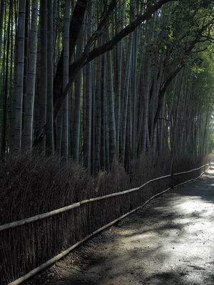 竹林 | 絶景事典