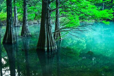 篠栗九大の森 | 絶景事典