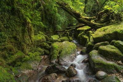 屋久島 新たな風景 | 絶景事典