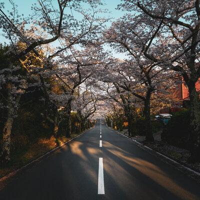 Sakura | 絶景事典