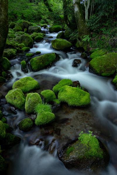 苔むす石群 | 絶景事典