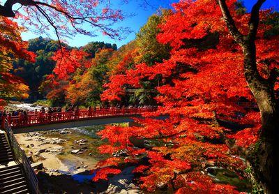 秋美景 足助の香嵐渓 | 絶景事典