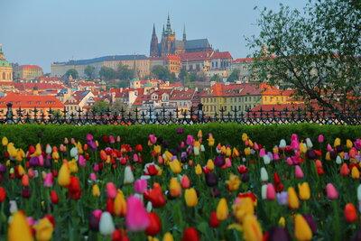 チューリップとプラハ城 | 絶景事典
