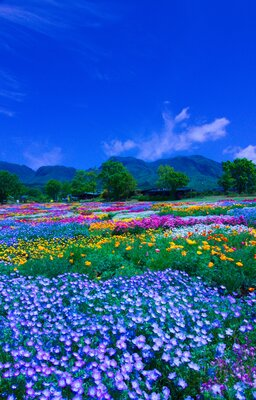 春彩の花畑   絶景事典