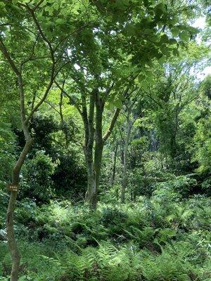 神奈川金沢自然園 | 絶景事典
