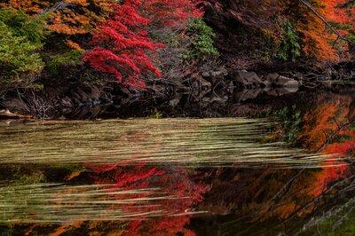 水面の水草と紅   絶景事典