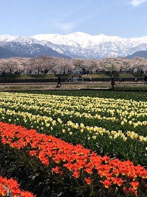 春の四重奏 | 絶景事典