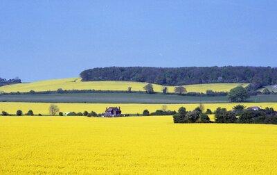 英国南東部の菜の花畑 | 絶景事典