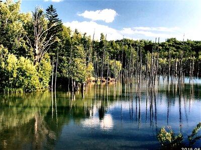 北海道美英町の青い池   絶景事典