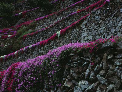 日本のマチュピチュ | 絶景事典