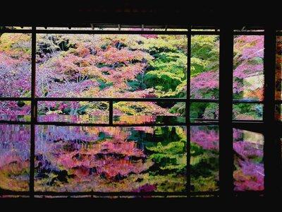 瑠璃光院の紅葉   絶景事典