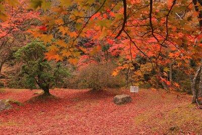 艶やかさに目を奪われる紅葉の美のメイン画像