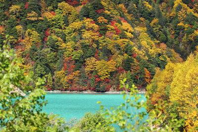 高瀬ダム湖の紅葉   絶景事典