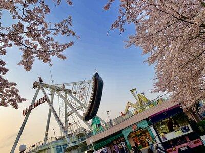 桜 | 絶景事典