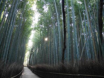 040嵯峨野 竹林の小径(京都) | 絶景事典