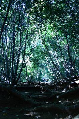 稲荷山コース | 絶景事典